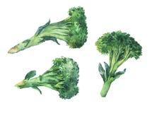 brokuły Ręka rysujący akwareli paintin ilustracji
