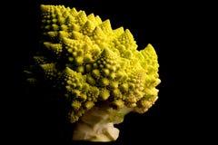 brokuły wpisują niskiego romanesco Zdjęcia Stock