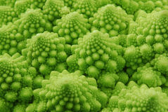 brokułu romanesco Obraz Stock