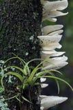 Bromélia et champignons en parc d'état de conserve de brin de Fakahatchee, FL photo libre de droits