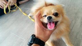 broma de los perros Fotografía de archivo libre de regalías