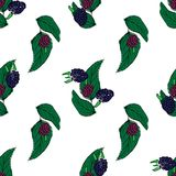 Brombeerhand gezeichnetes Muster auf Weiß Lizenzfreie Stockbilder