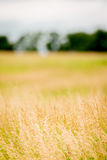 Brome hay field Stock Photography