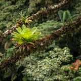 Bromeliáceas na floresta úmida imagens de stock