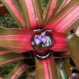 Bromelia, Costa Rica Royalty-vrije Stock Afbeeldingen
