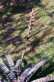 Bromelia en su hábitat natural Imagen de archivo libre de regalías