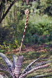 Bromelia en su hábitat natural Fotos de archivo
