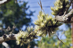 Bromelia en su hábitat natural Imágenes de archivo libres de regalías