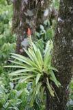 Bromelia met bloem Stock Afbeeldingen