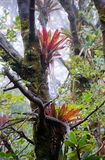 Bromelia met mist royalty-vrije stock afbeelding
