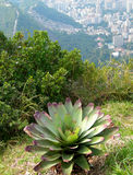 Bromelia plant on top of Corcovado Royalty Free Stock Photos