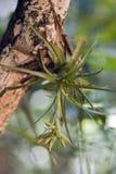 Bromelia verde florida Fotografía de archivo