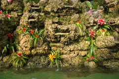 Bromeliaceae de las flores en una roca en los bancos del agua Fotografía de archivo