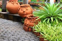 Bromeliad και flowerpot Στοκ Φωτογραφία