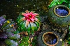 Bromeliad στον κήπο Στοκ Φωτογραφίες