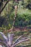 Bromeliad στο φυσικό βιότοπό του Στοκ Φωτογραφίες