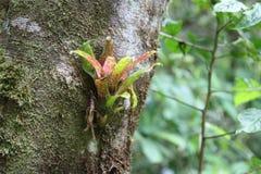 Bromeliad на дереве Стоковое Изображение RF