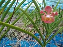 Bromeliad 免版税图库摄影