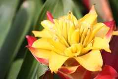 Bromeliad, Stock Photography