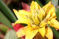 Bromeliad, Stock Images