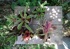 Bromeliad Стоковые Изображения