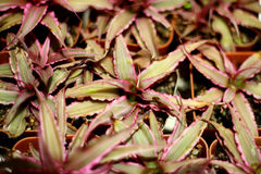 Bromeliad στοκ φωτογραφία