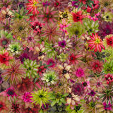 Bromeliad  background Stock Images