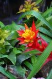 Bromeliad blommor royaltyfri fotografi