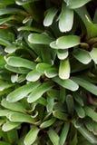 Close up of Bromeliad plant stock photos