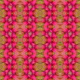 Bromeliad flower background Royalty Free Stock Photos
