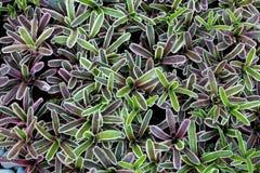 Bromeliad Flower Stock Images