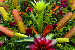 Bromeliad Flowers Royalty Free Stock Images