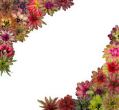Bromeliad frame Stock Photo