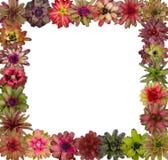 Bromeliad frame Stock Photography