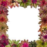 Bromeliad frame Stock Photos