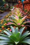 Bromeliad garden Stock Images