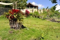 Bromeliad in the Garden Stock Image