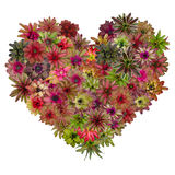 Bromeliad heart Royalty Free Stock Photos