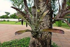 Bromeliad, monocot flowering plants of tropical region, garden decoration stock image