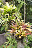 Bromeliad plants Stock Photos