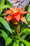 Bromeliad simulated  tropical forest Stock Photo