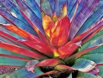 Bromeliad szczegół obraz stock