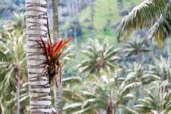 Bromeliad on a Tree Stock Images