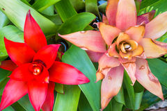Bromeliad treetop Stock Photography