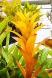 Bromeliad treetop Royalty Free Stock Image