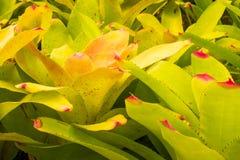 Bromeliad treetop Stock Image