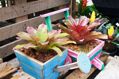 Bromeliad in wood pot Stock Photography