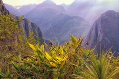 Bromeliads και εγγενείς εγκαταστάσεις κατά μήκος του ίχνους σε Machu Picchu στοκ φωτογραφία