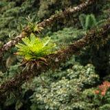 Bromeliads στο τροπικό δάσος στοκ εικόνες