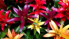 Bromeliads 库存照片
